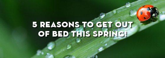 5-reasons-spring-no4