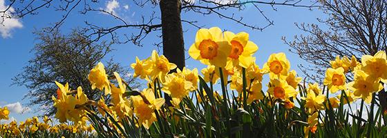 spring-blog-no4
